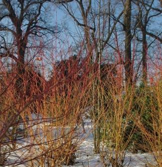 2009-01-05 la chesnaie sous la neige 50