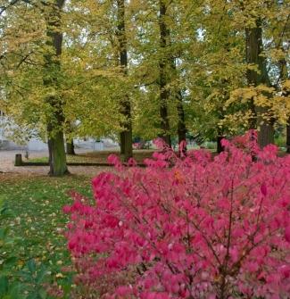 2010-11-02 - couleurs dautomne la chesnaie - 16
