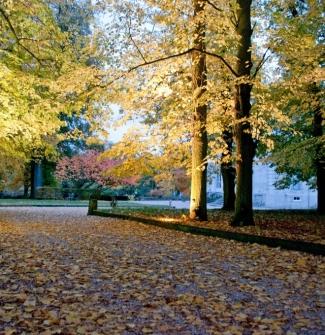 2010-11-02 - couleurs dautomne la chesnaie - 27